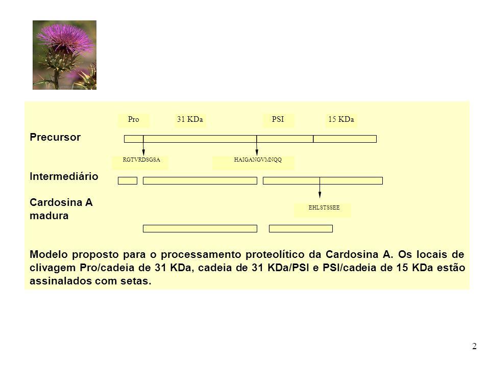 2 Precursor Intermediário Cardosina A madura Modelo proposto para o processamento proteolítico da Cardosina A. Os locais de clivagem Pro/cadeia de 31
