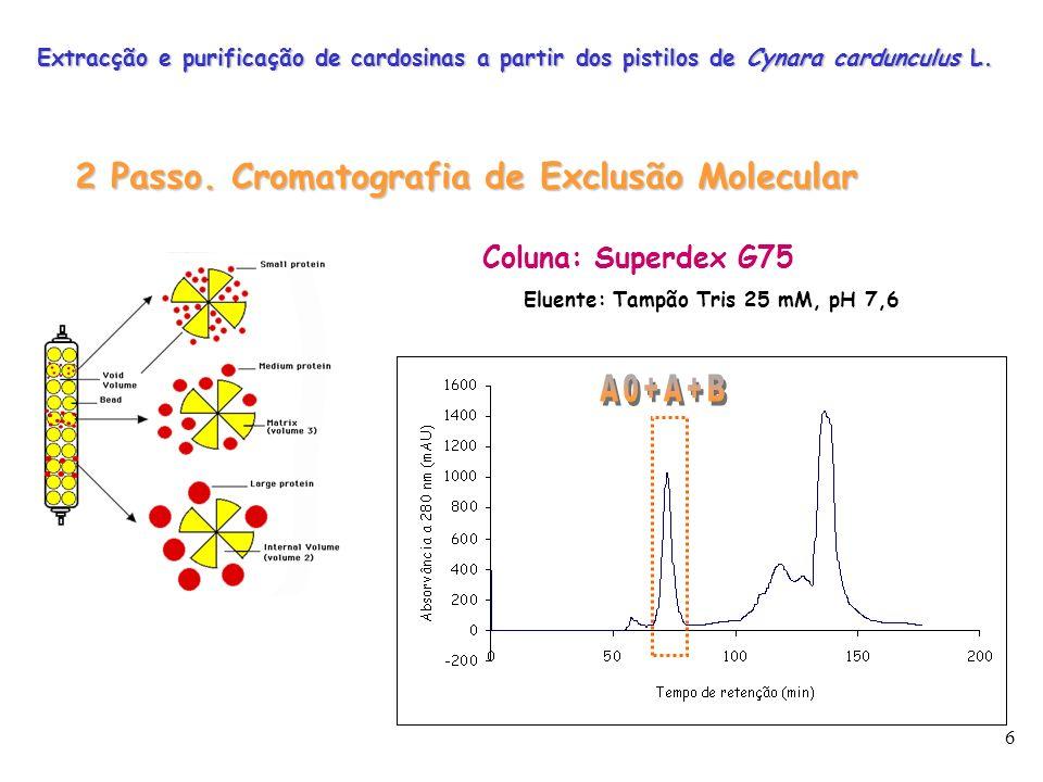 6 2 Passo. Cromatografia de Exclusão Molecular Coluna: Superdex G75 Eluente: Tampão Tris 25 mM, pH 7,6 Extracção e purificação de cardosinas a partir