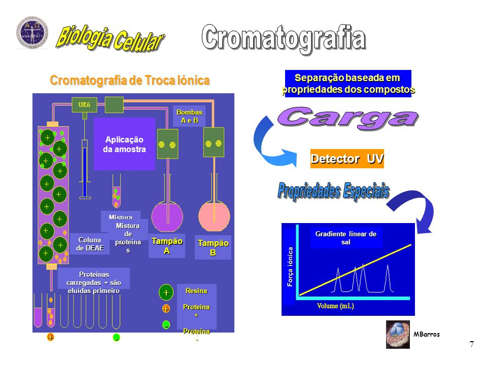 7 MBarros Separação baseada em propriedades dos compostos Detector UV Cromatografia de Troca Iónica + + - + - TampãoB TampãoA Bombas A e B Aplicação d