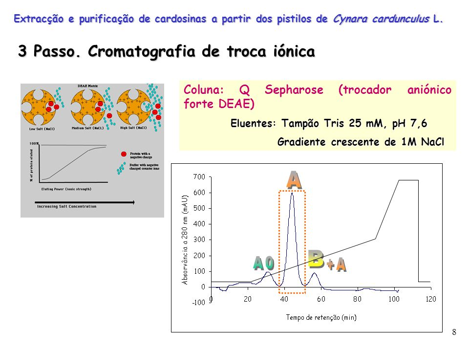 8 Coluna: Q Sepharose (trocador aniónico forte DEAE) Eluentes: Tampão Tris 25 mM, pH 7,6 Gradiente crescente de 1M NaCl Gradiente crescente de 1M NaCl