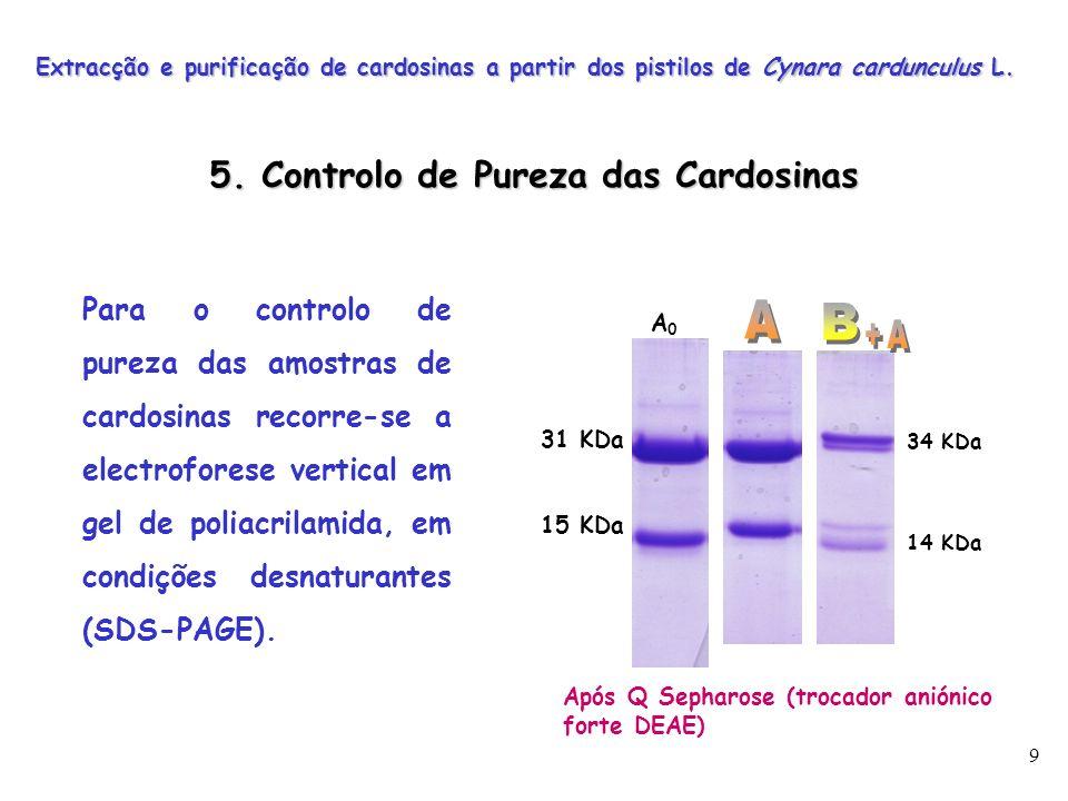 10 As amostras de cardosinas A 0, A e B recolhidas na cromatografia de troca iónica são sujeitas a uma nova cromatografia de exclusão molecular numa coluna Desalting G25, com o objectivo de remover o sal.
