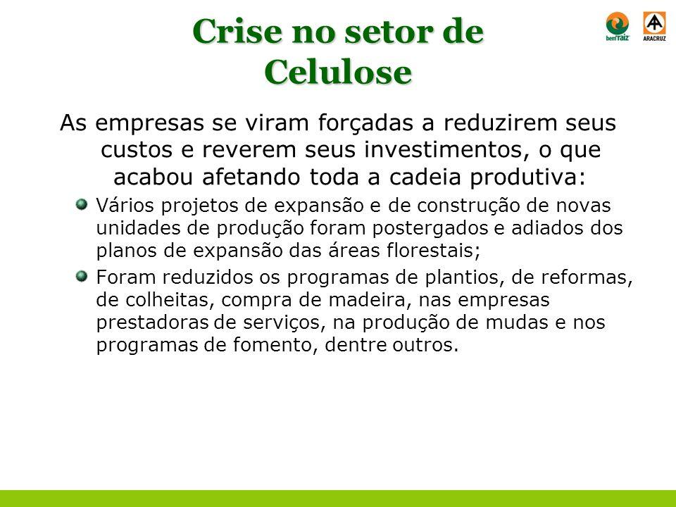 Crise no setor de Celulose As empresas se viram forçadas a reduzirem seus custos e reverem seus investimentos, o que acabou afetando toda a cadeia pro