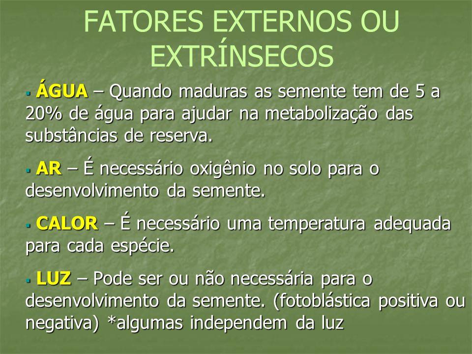 FATORES EXTERNOS OU EXTRÍNSECOS ÁGUA – Quando maduras as semente tem de 5 a 20% de água para ajudar na metabolização das substâncias de reserva. ÁGUA