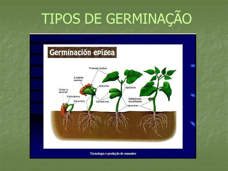 TIPOS DE GERMINAÇÃO