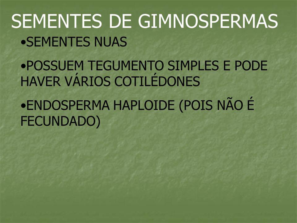 SEMENTES DE GIMNOSPERMAS SEMENTES NUAS POSSUEM TEGUMENTO SIMPLES E PODE HAVER VÁRIOS COTILÉDONES ENDOSPERMA HAPLOIDE (POIS NÃO É FECUNDADO)