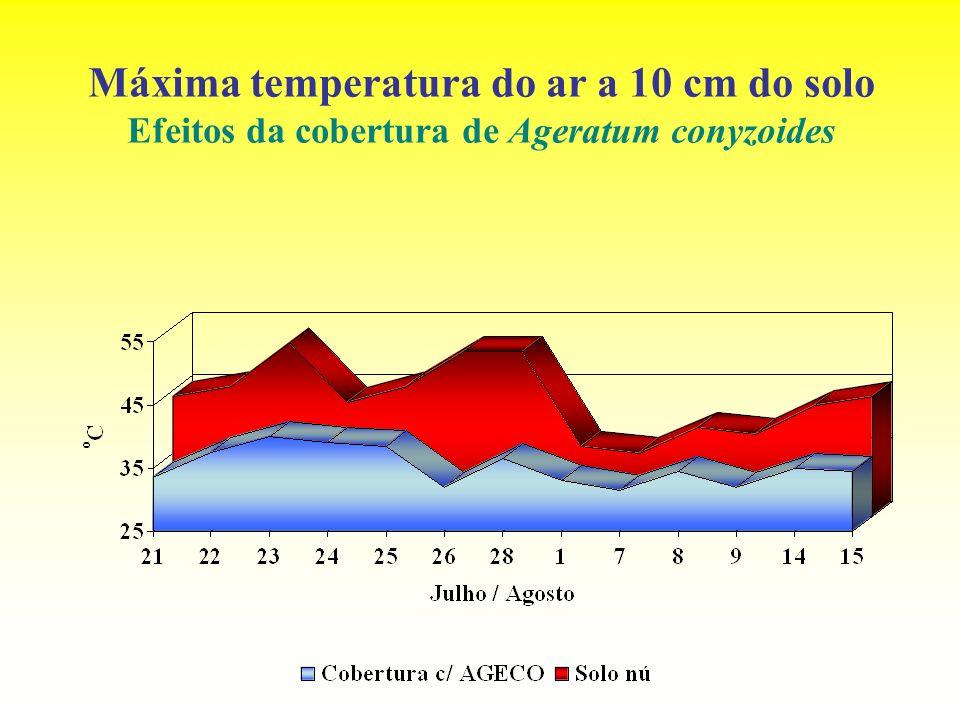 Máxima temperatura do ar a 10 cm do solo Efeitos da cobertura de Ageratum conyzoides