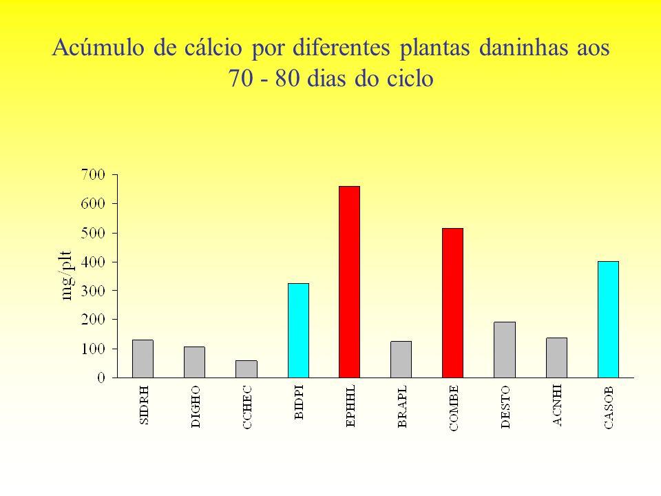 Acúmulo de cálcio por diferentes plantas daninhas aos 70 - 80 dias do ciclo