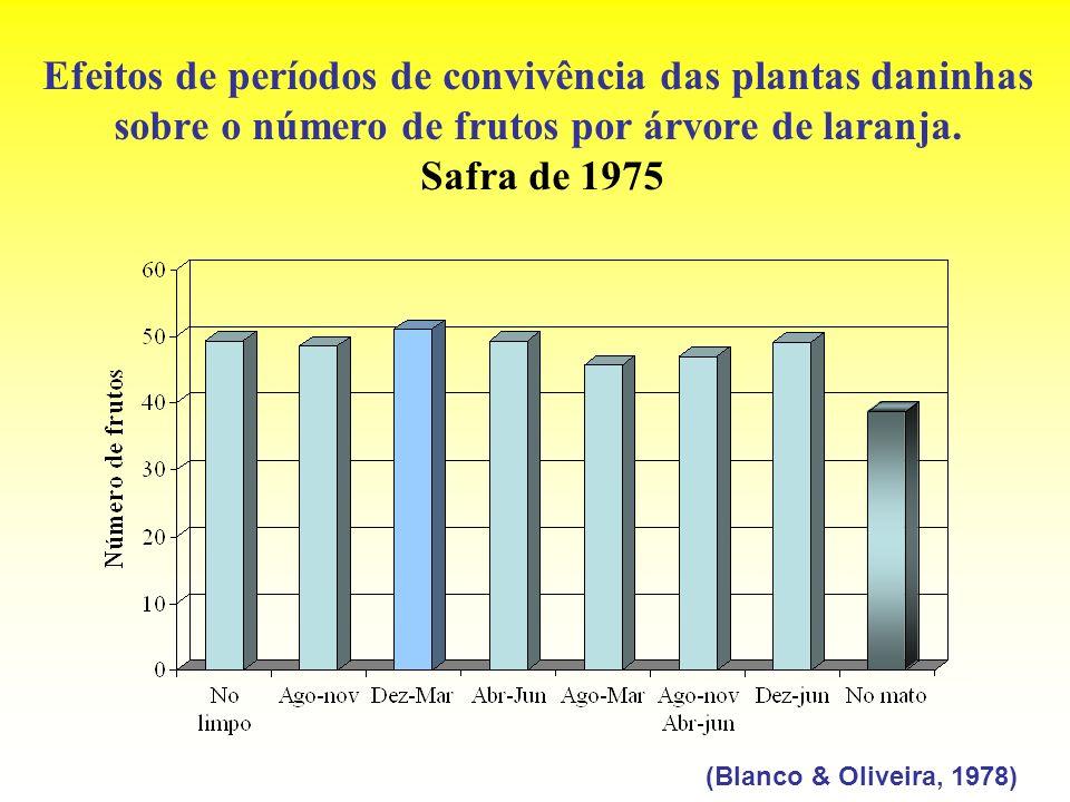 Efeitos de períodos de convivência das plantas daninhas sobre o número de frutos por árvore de laranja. Safra de 1975 (Blanco & Oliveira, 1978)