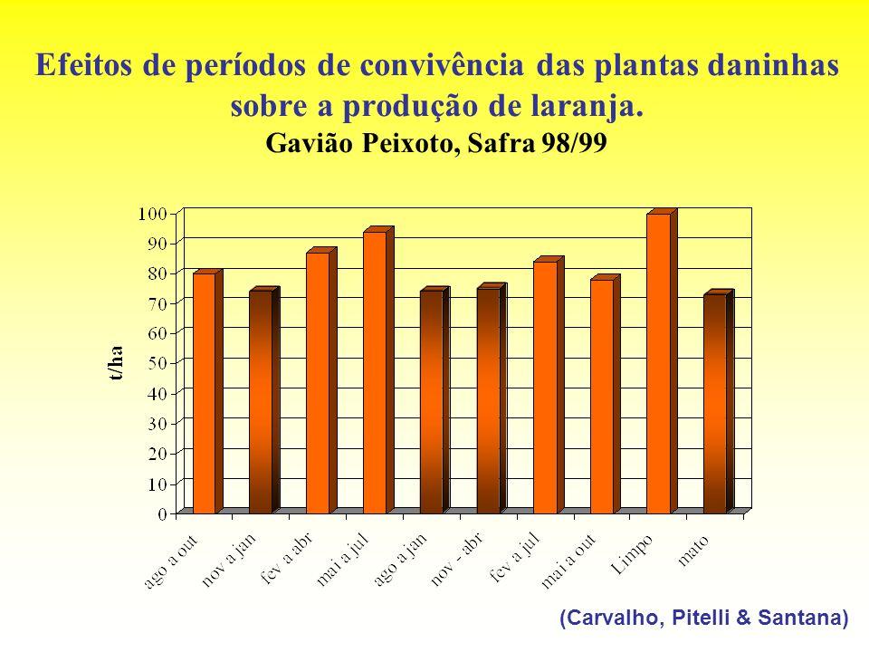 Efeitos de períodos de convivência das plantas daninhas sobre a produção de laranja. Gavião Peixoto, Safra 98/99 (Carvalho, Pitelli & Santana)