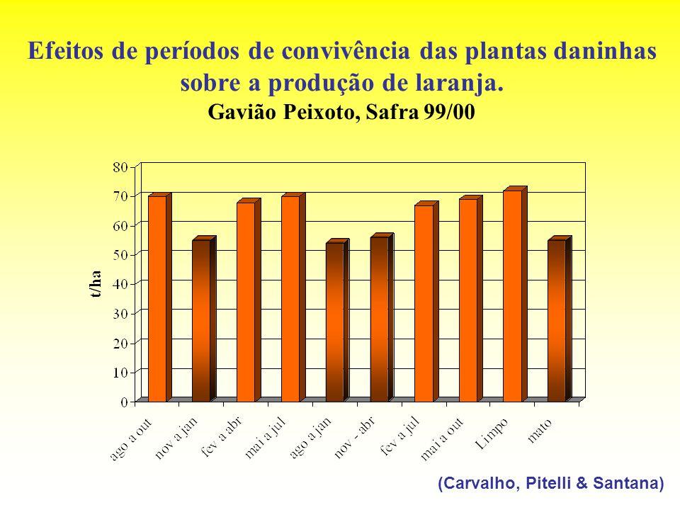 Efeitos de períodos de convivência das plantas daninhas sobre a produção de laranja. Gavião Peixoto, Safra 99/00 (Carvalho, Pitelli & Santana)