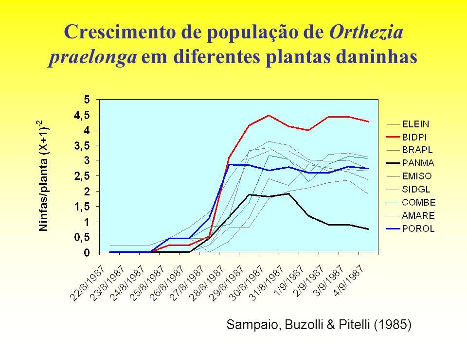 Crescimento de população de Orthezia praelonga em diferentes plantas daninhas Sampaio, Buzolli & Pitelli (1985)