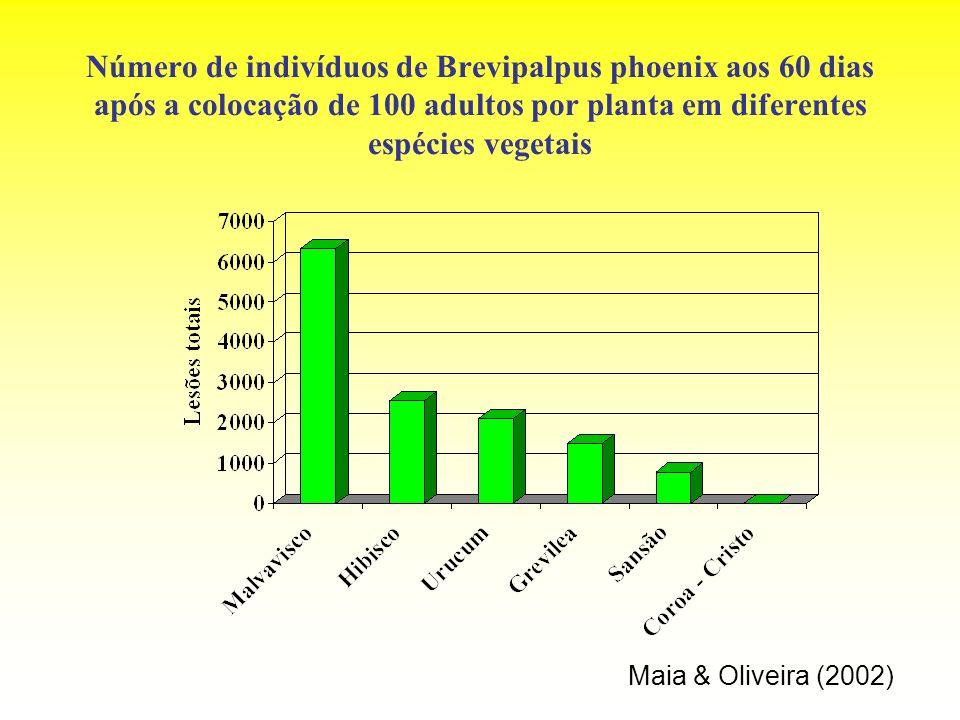 Número de indivíduos de Brevipalpus phoenix aos 60 dias após a colocação de 100 adultos por planta em diferentes espécies vegetais Maia & Oliveira (20