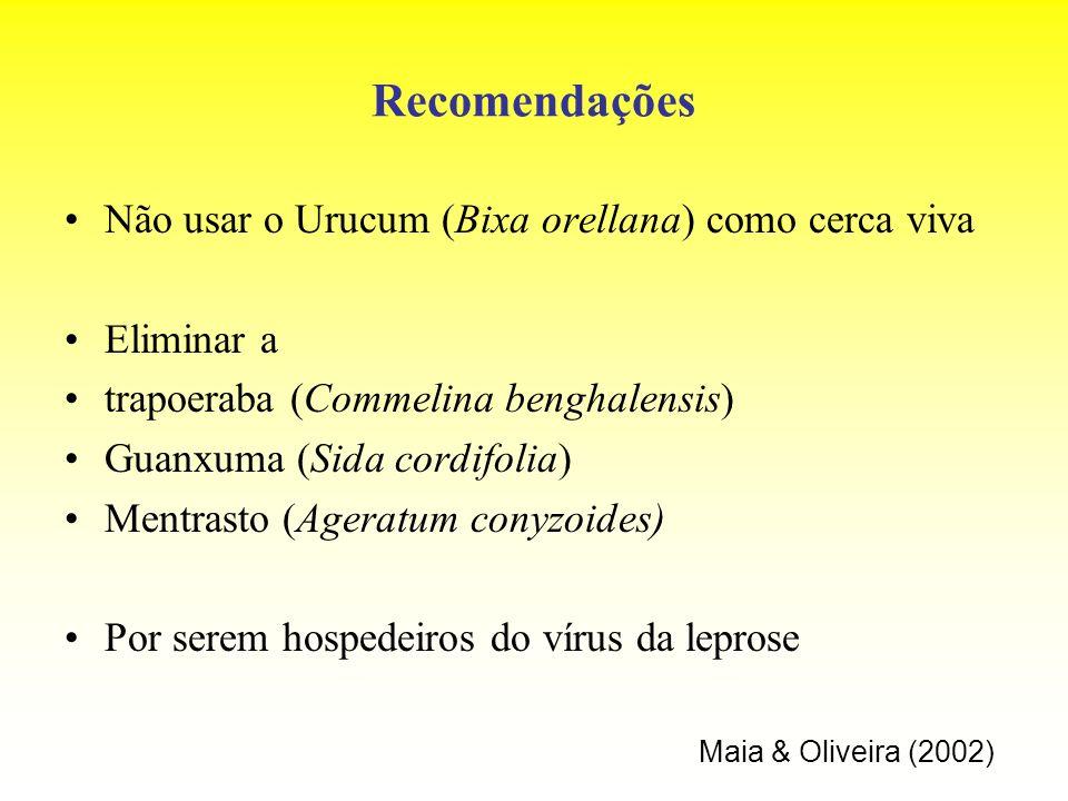Recomendações Não usar o Urucum (Bixa orellana) como cerca viva Eliminar a trapoeraba (Commelina benghalensis) Guanxuma (Sida cordifolia) Mentrasto (A