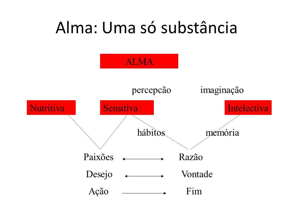 Alma: Uma só substância ALMA NutritivaSensitivaIntelectiva percepcãoimaginação hábitosmemória PaixõesRazão DesejoVontade AçãoFim
