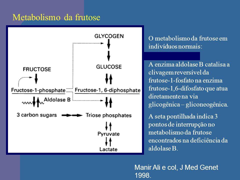 Metabolismo da frutose O metabolismo da frutose em indivíduos normais: A enzima aldolase B catalisa a clivagem reversível da frutose-1-fosfato na enzi