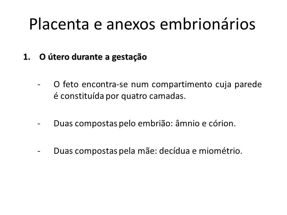 Placenta e anexos embrionários 1.O útero durante a gestação -O feto encontra-se num compartimento cuja parede é constituída por quatro camadas. -Duas