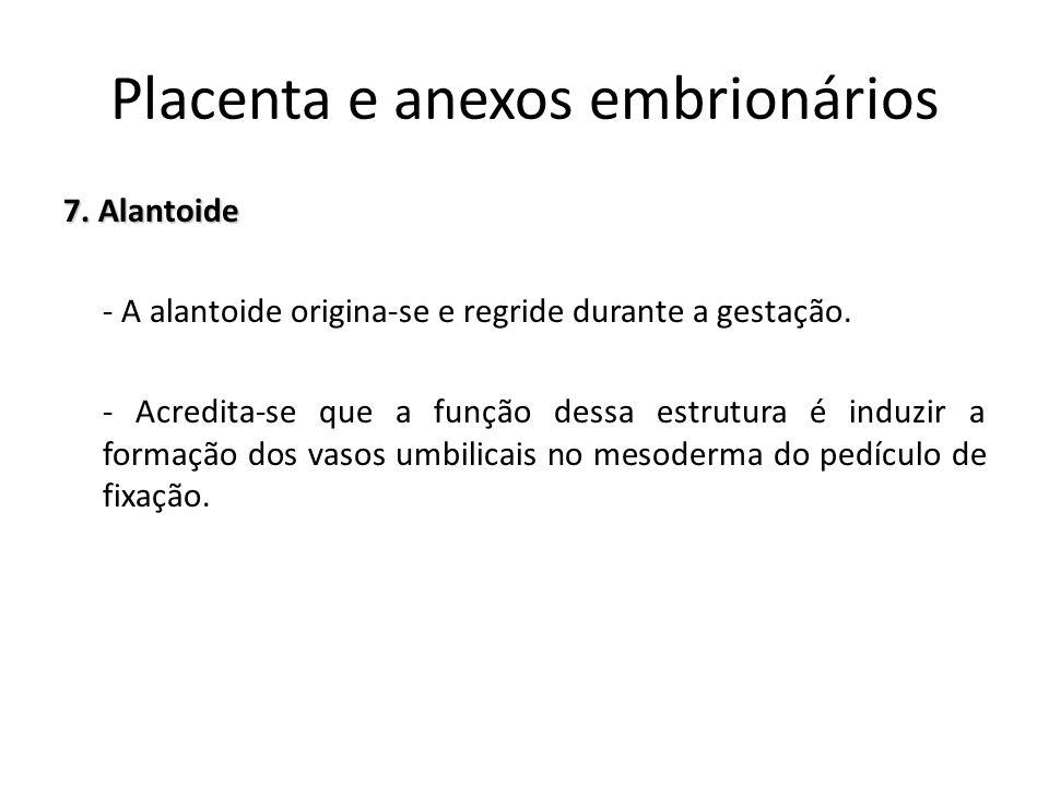 7. Alantoide - A alantoide origina-se e regride durante a gestação. - Acredita-se que a função dessa estrutura é induzir a formação dos vasos umbilica