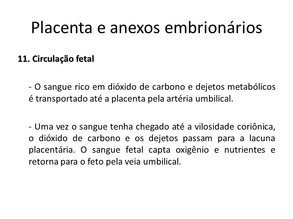 11. Circulação fetal - O sangue rico em dióxido de carbono e dejetos metabólicos é transportado até a placenta pela artéria umbilical. - Uma vez o san