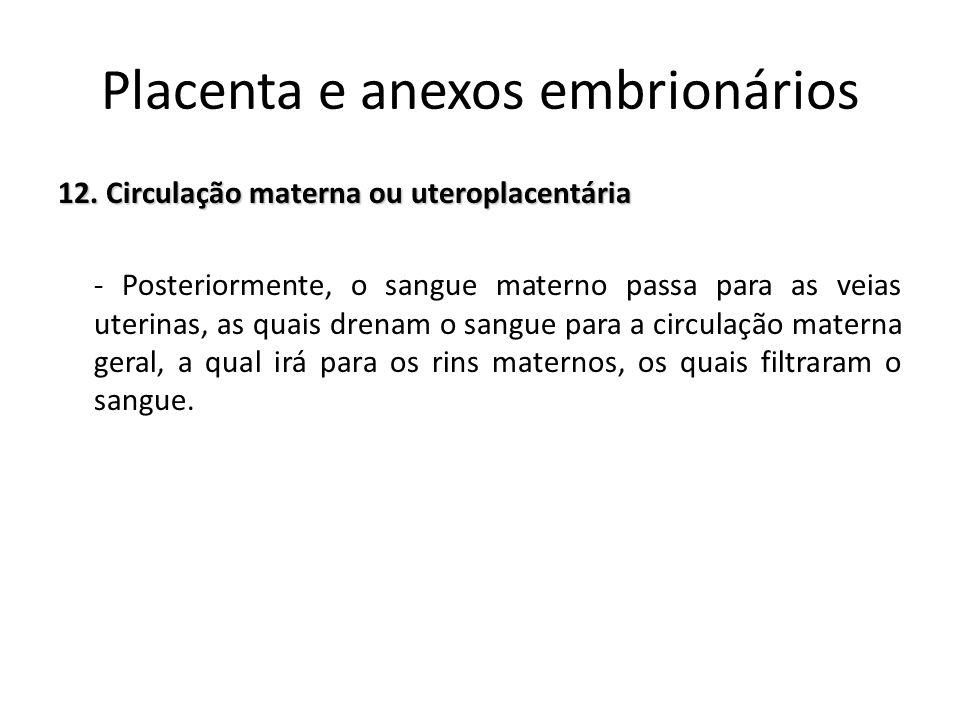 12. Circulação materna ou uteroplacentária - Posteriormente, o sangue materno passa para as veias uterinas, as quais drenam o sangue para a circulação