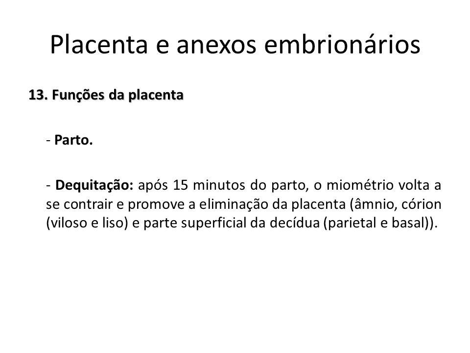 13. Funções da placenta - Parto. - Dequitação: após 15 minutos do parto, o miométrio volta a se contrair e promove a eliminação da placenta (âmnio, có