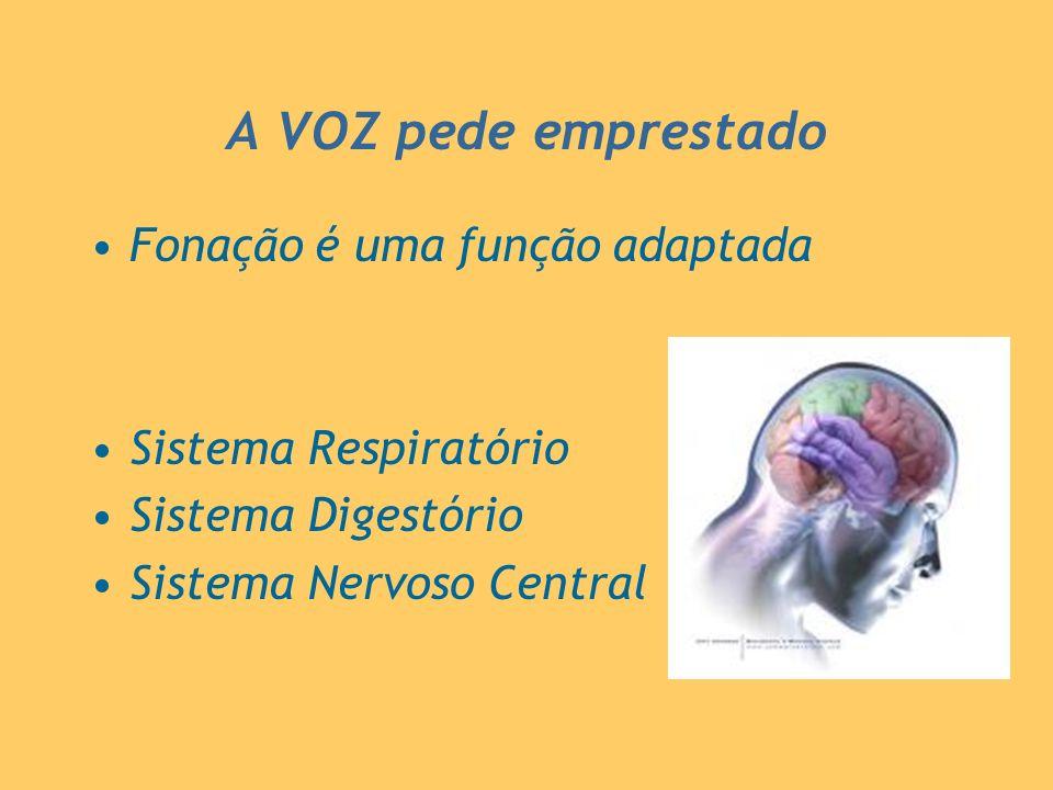 A VOZ pede emprestado Fonação é uma função adaptada Sistema Respiratório Sistema Digestório Sistema Nervoso Central