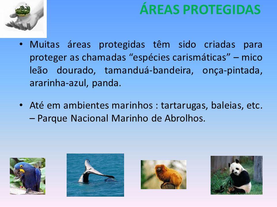 Muitas áreas protegidas têm sido criadas para proteger as chamadas espécies carismáticas – mico leão dourado, tamanduá-bandeira, onça-pintada, ararinh