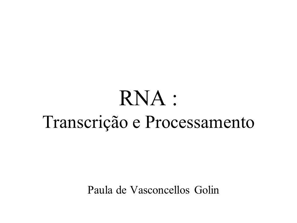RNA : Transcrição e Processamento Paula de Vasconcellos Golin