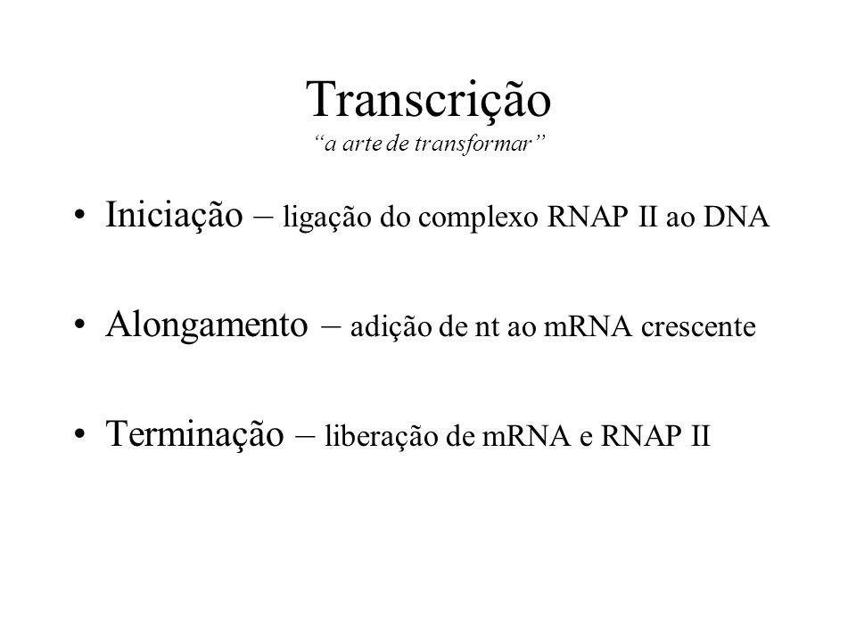Transcrição a arte de transformar Iniciação – ligação do complexo RNAP II ao DNA Alongamento – adição de nt ao mRNA crescente Terminação – liberação d