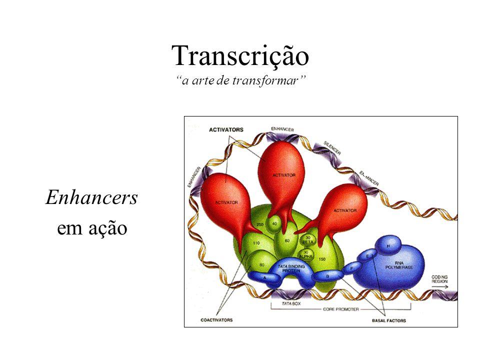 Transcrição a arte de transformar Enhancers em ação