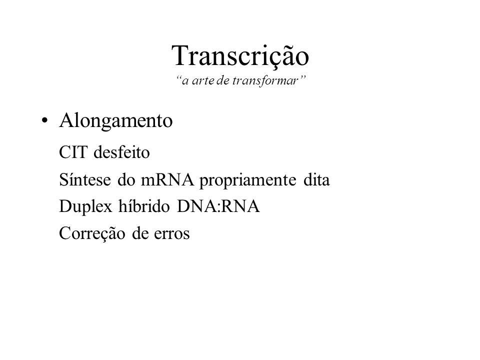 Transcrição a arte de transformar Alongamento CIT desfeito Síntese do mRNA propriamente dita Duplex híbrido DNA:RNA Correção de erros