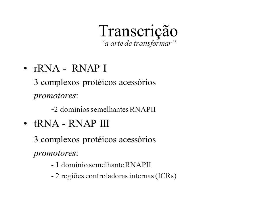 Transcrição a arte de transformar rRNA - RNAP I 3 complexos protéicos acessórios promotores: - 2 domínios semelhantes RNAPII tRNA - RNAP III 3 complex
