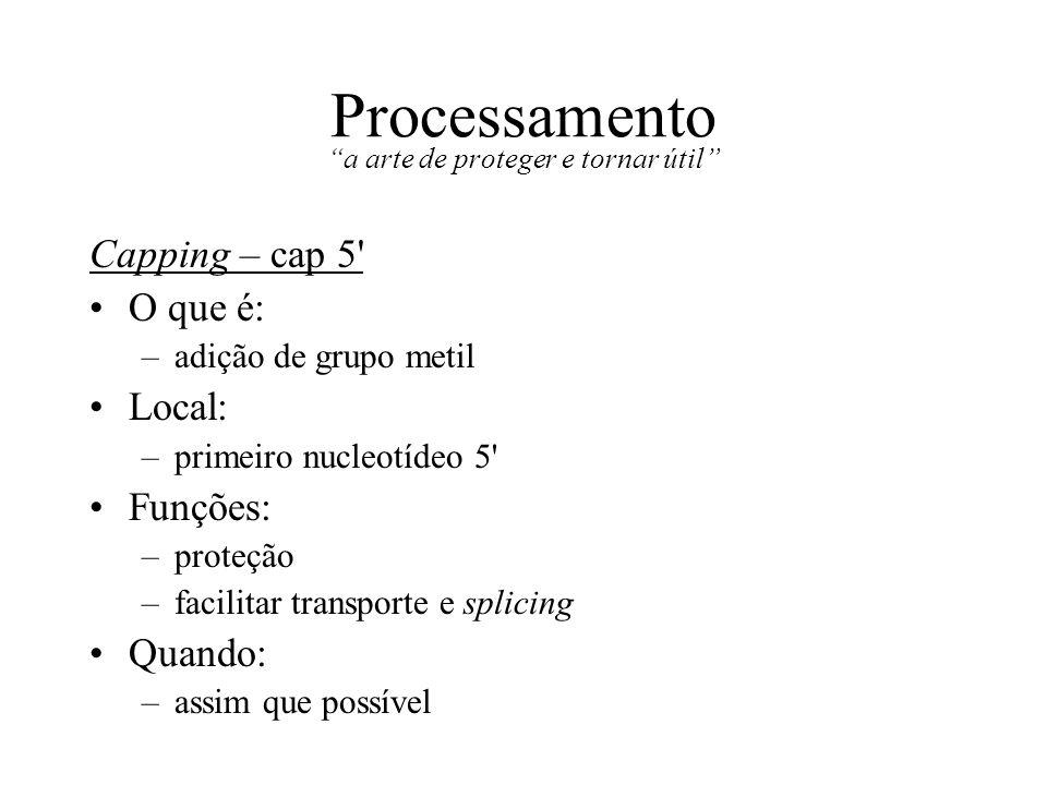 Processamento a arte de proteger e tornar útil Capping – cap 5' O que é: –adição de grupo metil Local: –primeiro nucleotídeo 5' Funções: –proteção –fa