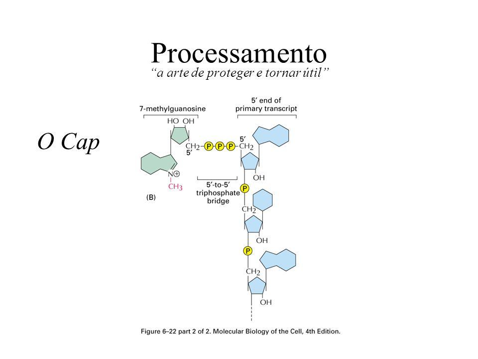 Processamento a arte de proteger e tornar útil O Cap