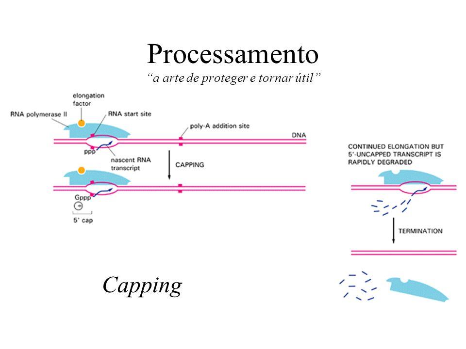 Processamento a arte de proteger e tornar útil Capping
