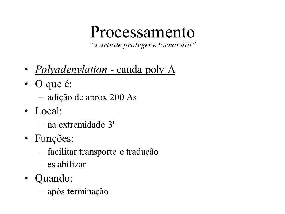 Processamento a arte de proteger e tornar útil Polyadenylation - cauda poly A O que é: –adição de aprox 200 As Local: –na extremidade 3' Funções: –fac