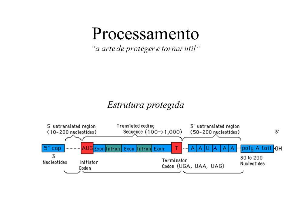 Processamento a arte de proteger e tornar útil Estrutura protegida