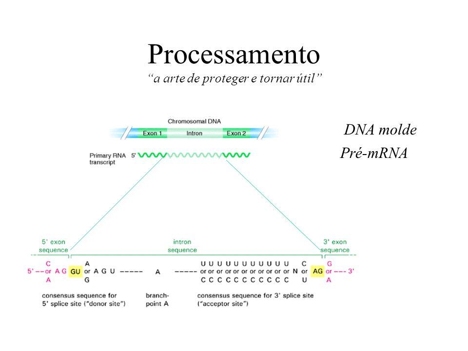 Processamento a arte de proteger e tornar útil DNA molde Pré-mRNA