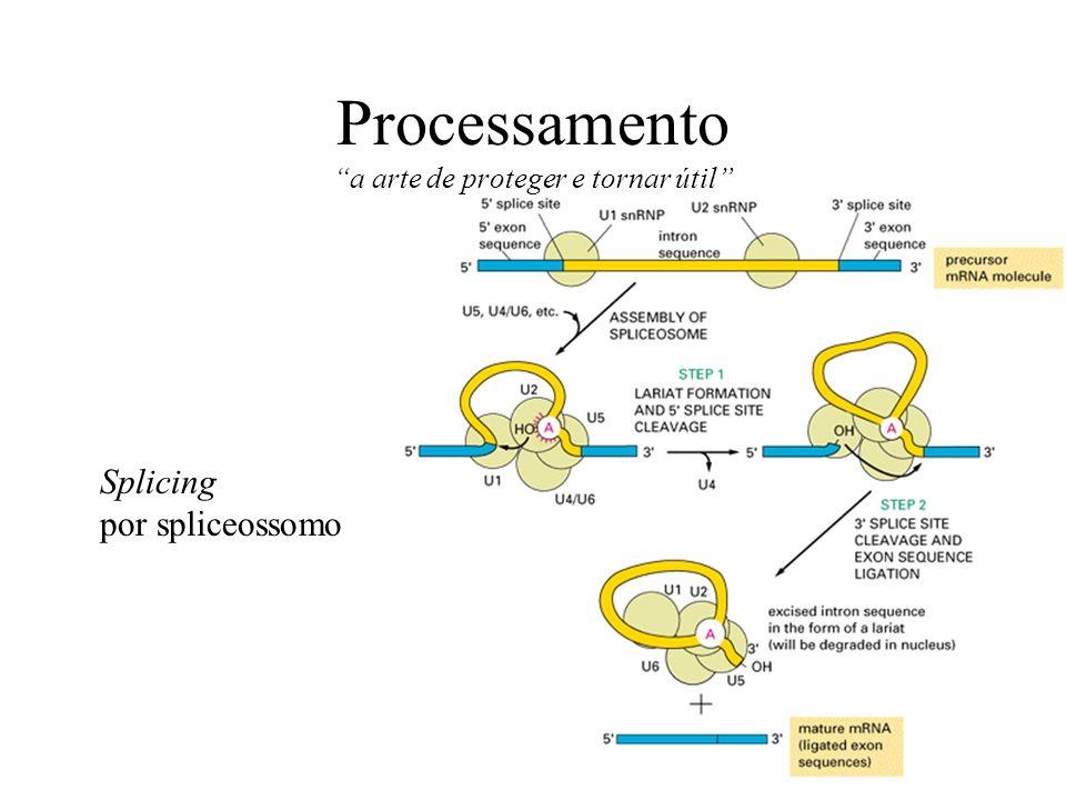 Splicing por spliceossomo Processamento a arte de proteger e tornar útil