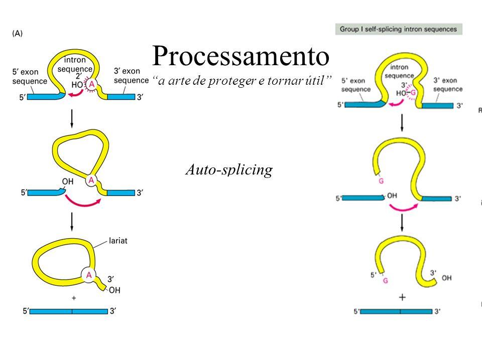 Processamento a arte de proteger e tornar útil Auto-splicing