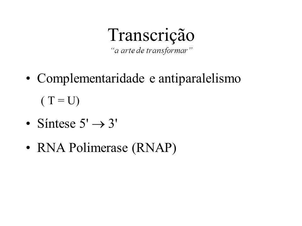 Transcrição a arte de transformar Complementaridade e antiparalelismo ( T = U) Síntese 5' 3' RNA Polimerase (RNAP)