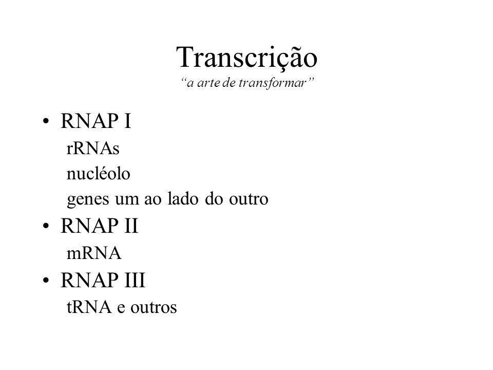 Transcrição a arte de transformar RNAP I rRNAs nucléolo genes um ao lado do outro RNAP II mRNA RNAP III tRNA e outros