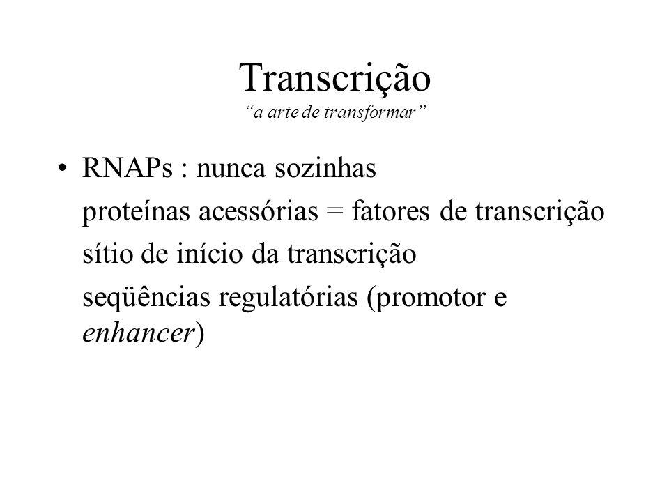 Transcrição a arte de transformar RNAPs : nunca sozinhas proteínas acessórias = fatores de transcrição sítio de início da transcrição seqüências regul