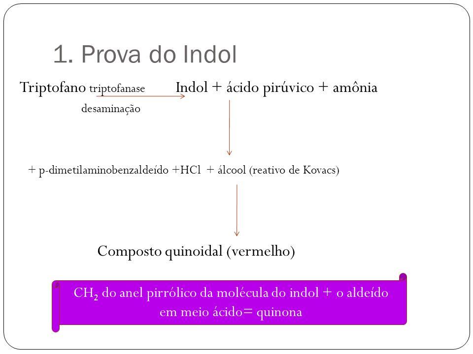 1. Prova do Indol Triptofano triptofanase Indol + ácido pirúvico + amônia desaminação + p-dimetilaminobenzaldeído +HCl + álcool (reativo de Kovacs) Co