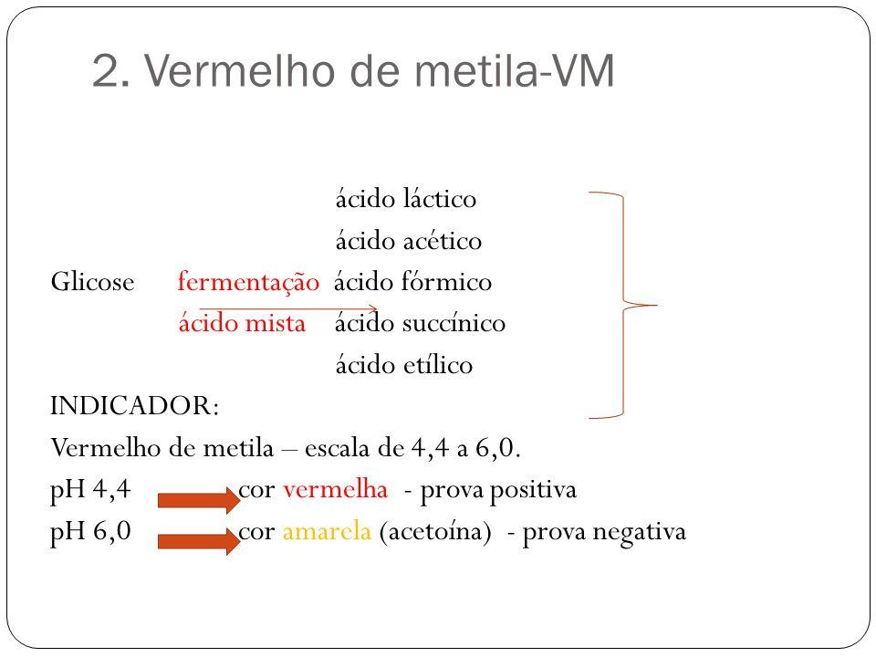 2. Vermelho de metila-VM ácido láctico ácido acético Glicose fermentação ácido fórmico ácido mista ácido succínico ácido etílico INDICADOR: Vermelho d