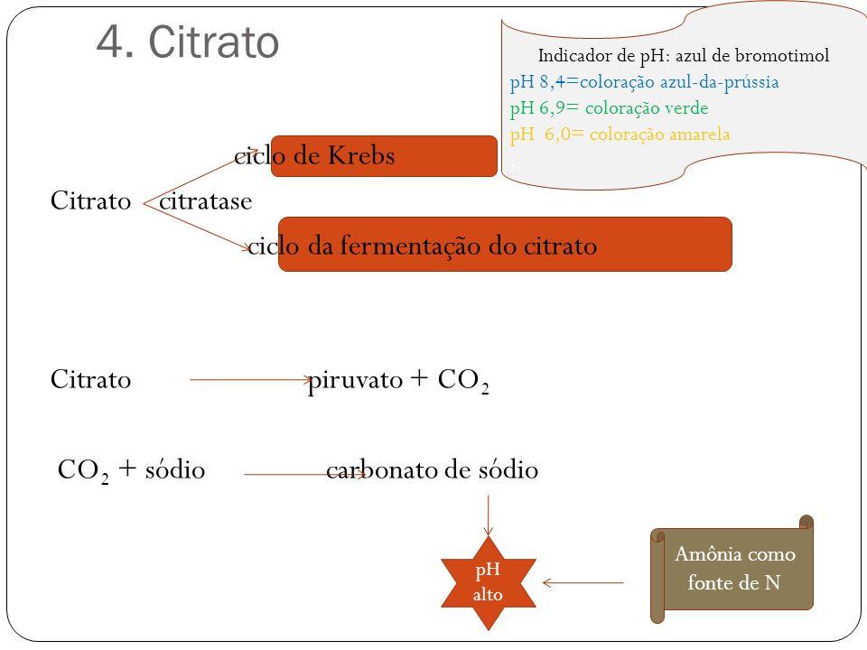 4. Citrato ciclo de Krebs Citrato citratase ciclo da fermentação do citrato Citrato piruvato + CO 2 CO 2 + sódio carbonato de sódio Amônia como fonte
