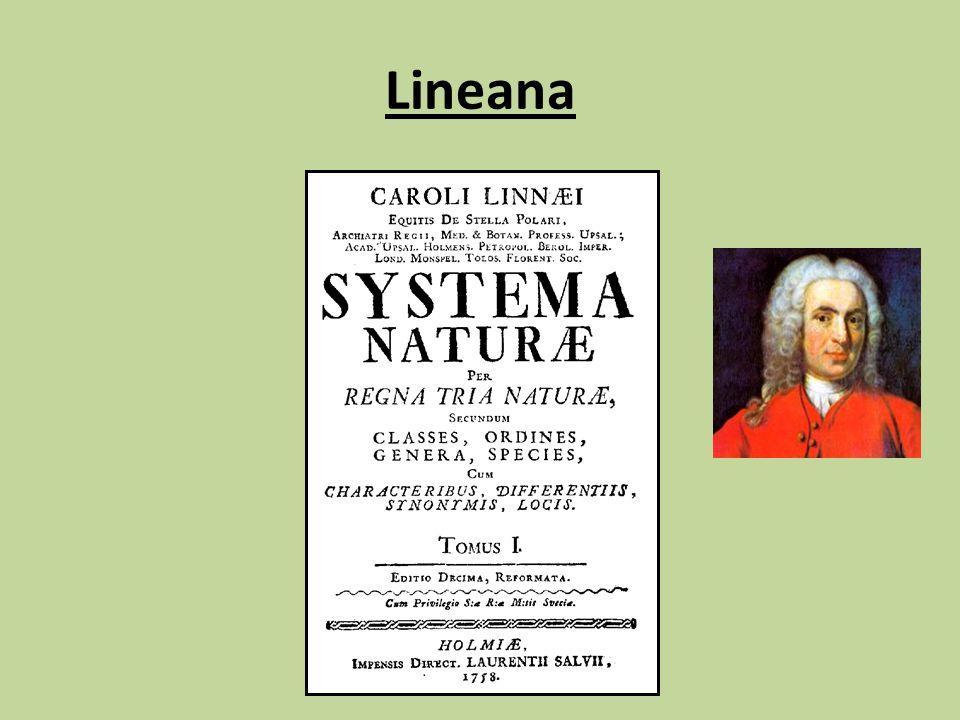 Lineana