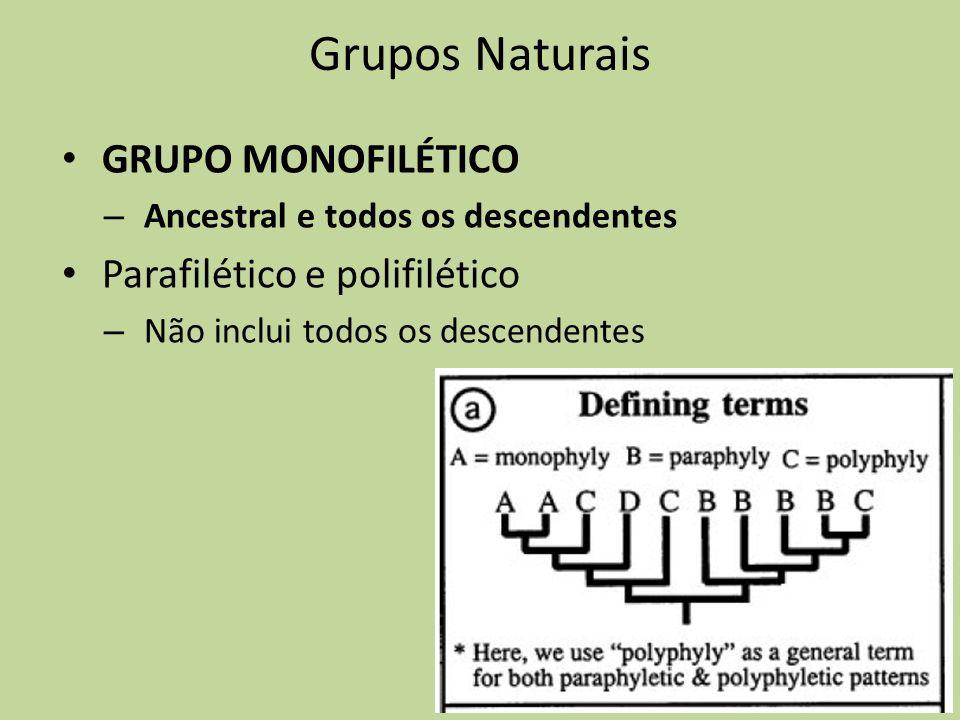 Grupos Naturais GRUPO MONOFILÉTICO – Ancestral e todos os descendentes Parafilético e polifilético – Não inclui todos os descendentes