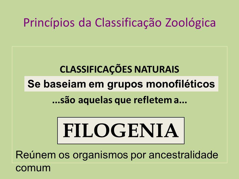 Princípios da Classificação Zoológica CLASSIFICAÇÕES NATURAIS...são aquelas que refletem a... HISTÓRIA EVOLUTIVA FILOGENIA Reúnem os organismos por an