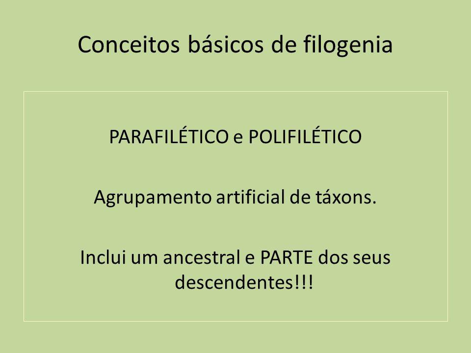 Conceitos básicos de filogenia PARAFILÉTICO e POLIFILÉTICO Agrupamento artificial de táxons. Inclui um ancestral e PARTE dos seus descendentes!!!