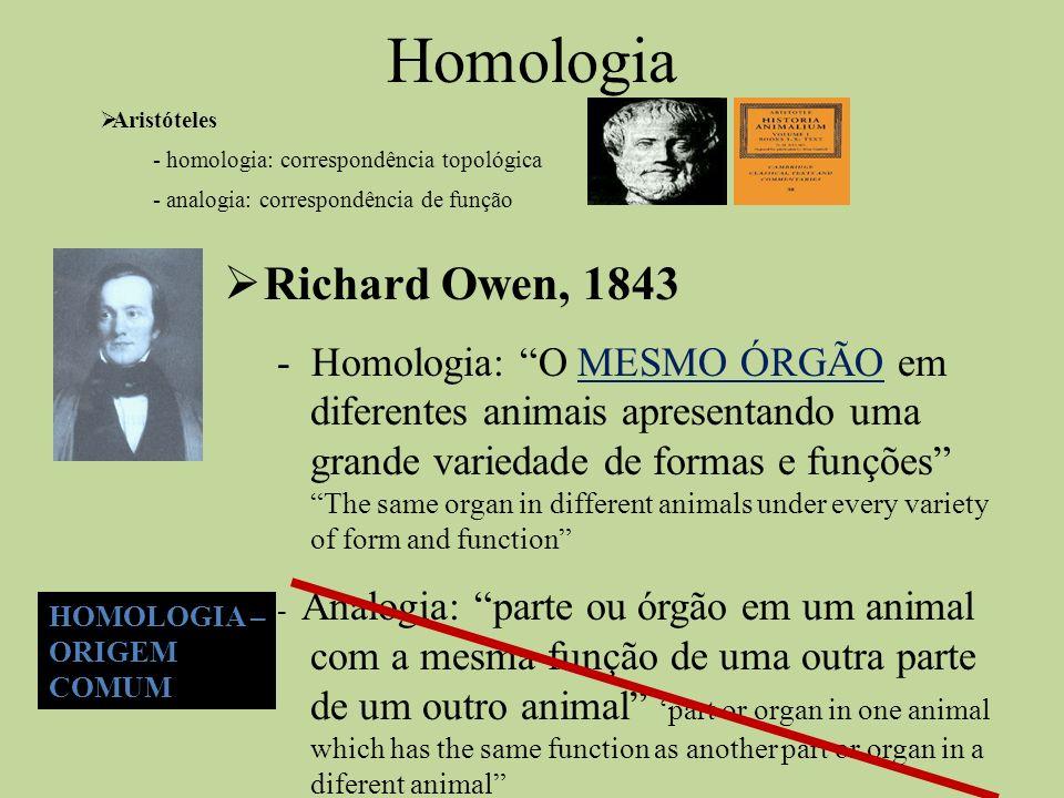 Homologia Aristóteles - homologia: correspondência topológica - analogia: correspondência de função Richard Owen, 1843 - Homologia: O MESMO ÓRGÃO em d